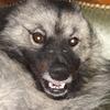 OrokanaTaitan's avatar