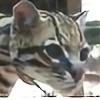 Oscelot's avatar