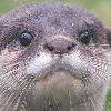 OtterFotter's avatar