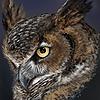 owl-forrest's avatar