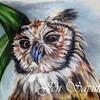 OwlEyeDesigns's avatar