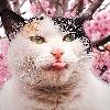 OyasumiNasai705's avatar