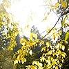 oznurr's avatar