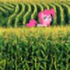 pageturner1988's avatar