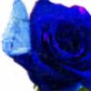 paintedbluerose's avatar
