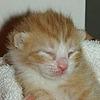 Pambles's avatar