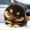 pandas7890's avatar