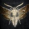 Pandora7X7's avatar