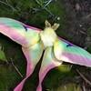 pandorathemoon's avatar