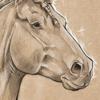 Pashiino's avatar