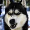 paulius514's avatar