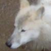 pavlli's avatar