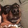 Pawsiro's avatar