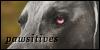 pawsitives's avatar