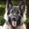 pawstream's avatar