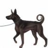 Payna's avatar