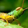 pedro-96's avatar