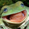 PedroLeSapo's avatar