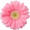 pegasus36's avatar