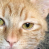Pegatha65's avatar