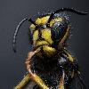 pensivewasp's avatar