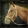 pentaxeric's avatar