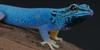 PeopleThatAreGeckos's avatar