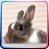 Peristrophe's avatar