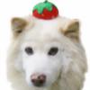 perodog2's avatar