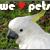 Pet-artists-club's avatar