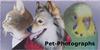 Pet-Photographs's avatar