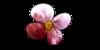 petalfrost-fanclub's avatar