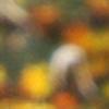 petreabogdan's avatar