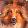 PetsPaints's avatar