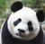 pewdiepew12's avatar