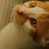 peygaari's avatar