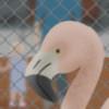 pharmwool's avatar