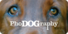 PhoDOGraphyGroup's avatar
