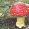 phoebeplupp's avatar
