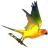 Phoeline's avatar