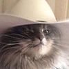 PhoenixAku's avatar