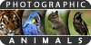 Photographic-Animals