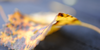 PhotographingForLife's avatar