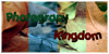 PhotographyKingdom's avatar