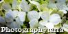PhotographyTerra's avatar