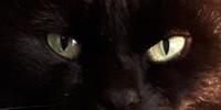 Photoillusionen's avatar