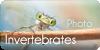 PhotoInvertebrates