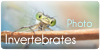 PhotoInvertebrates's avatar