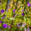 PhotoMama77's avatar