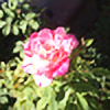 PhotoPheonix's avatar